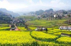 武隆庙垭开启乡村旅游季 去看油菜花可体验打糍粑乐趣